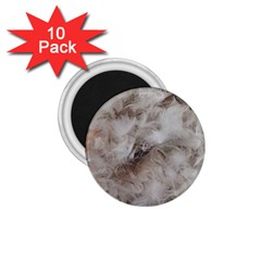 Down Comforter Feathers Goose Duck Feather Photography 1.75  Magnets (10 pack)