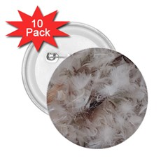 Down Comforter Feathers Goose Duck Feather Photography 2.25  Buttons (10 pack)