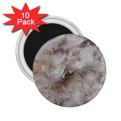 Down Comforter Feathers Goose Duck Feather Photography 2.25  Magnets (10 pack)