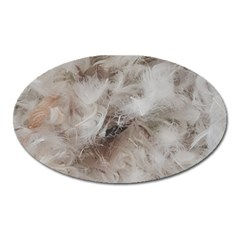 Down Comforter Feathers Goose Duck Feather Photography Oval Magnet