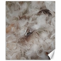 Down Comforter Feathers Goose Duck Feather Photography Canvas 8  x 10