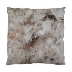 Down Comforter Feathers Goose Duck Feather Photography Standard Cushion Case (One Side)