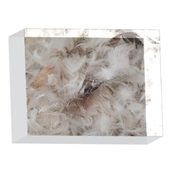 Down Comforter Feathers Goose Duck Feather Photography 5 x 7  Acrylic Photo Blocks