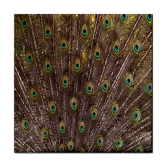 Purple Peacock Feather Wallpaper Tile Coasters