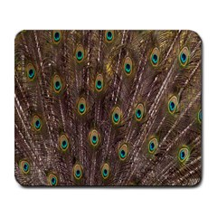 Purple Peacock Feather Wallpaper Large Mousepads