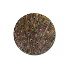 Purple Peacock Feather Wallpaper Magnet 3  (Round)