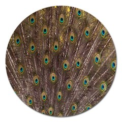 Purple Peacock Feather Wallpaper Magnet 5  (Round)