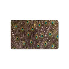 Purple Peacock Feather Wallpaper Magnet (Name Card)