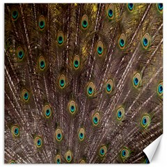 Purple Peacock Feather Wallpaper Canvas 16  x 16