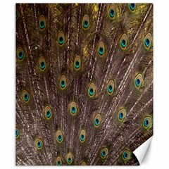 Purple Peacock Feather Wallpaper Canvas 20  x 24
