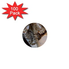 Ocicat Tawny Kitten With Cinnamon Mother  1  Mini Buttons (100 pack)
