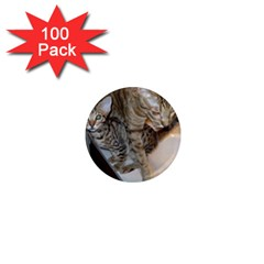 Ocicat Tawny Kitten With Cinnamon Mother  1  Mini Magnets (100 pack)