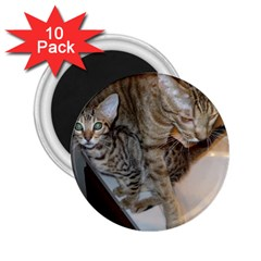 Ocicat Tawny Kitten With Cinnamon Mother  2.25  Magnets (10 pack)