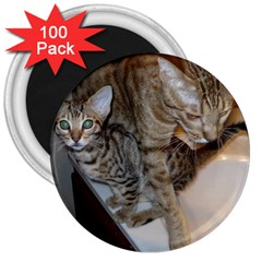 Ocicat Tawny Kitten With Cinnamon Mother  3  Magnets (100 pack)