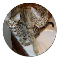 Ocicat Tawny Kitten With Cinnamon Mother  Magnet 5  (Round)