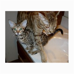 Ocicat Tawny Kitten With Cinnamon Mother  Small Glasses Cloth (2-Side)