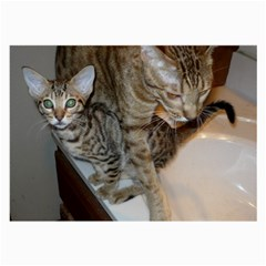 Ocicat Tawny Kitten With Cinnamon Mother  Large Glasses Cloth
