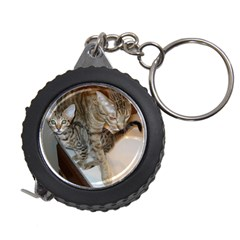 Ocicat Tawny Kitten With Cinnamon Mother  Measuring Tapes
