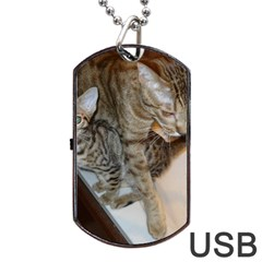 Ocicat Tawny Kitten With Cinnamon Mother  Dog Tag USB Flash (Two Sides)