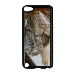 Ocicat Tawny Kitten With Cinnamon Mother  Apple iPod Touch 5 Case (Black)