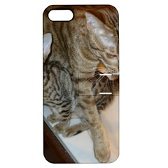Ocicat Tawny Kitten With Cinnamon Mother  Apple iPhone 5 Hardshell Case with Stand