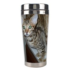 Ocicat Tawny Kitten With Cinnamon Mother  Stainless Steel Travel Tumblers