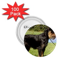 Brussels Griffon Full  1.75  Buttons (100 pack)