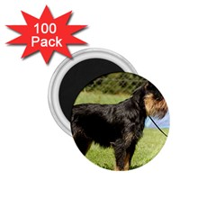 Brussels Griffon Full  1.75  Magnets (100 pack)