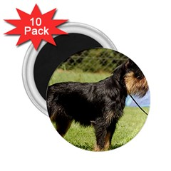 Brussels Griffon Full  2.25  Magnets (10 pack)