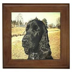 Black English Cocker Spaniel  Framed Tiles