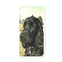 Black English Cocker Spaniel  Apple iPhone 4 Case (White)