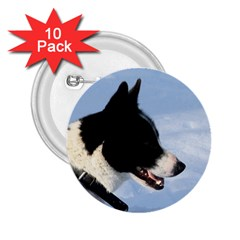 Karelian Bear Dog 2.25  Buttons (10 pack)