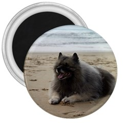 Keeshond On Beach  3  Magnets