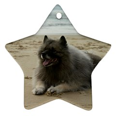 Keeshond On Beach  Ornament (Star)