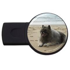 Keeshond On Beach  USB Flash Drive Round (2 GB)