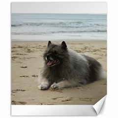 Keeshond On Beach  Canvas 8  x 10