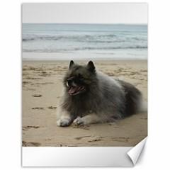 Keeshond On Beach  Canvas 18  x 24
