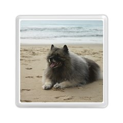 Keeshond On Beach  Memory Card Reader (Square)
