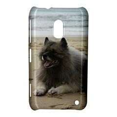 Keeshond On Beach  Nokia Lumia 620