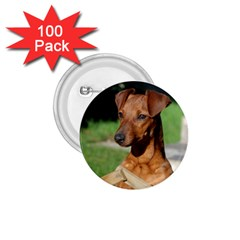 Min Pin On Gate  1.75  Buttons (100 pack)