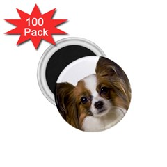 Papillon 1.75  Magnets (100 pack)