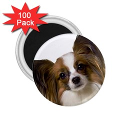 Papillon 2.25  Magnets (100 pack)