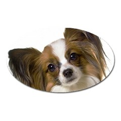 Papillon Oval Magnet