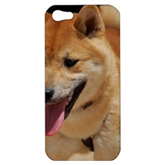 4 Shiba Inu Apple iPhone 5 Hardshell Case
