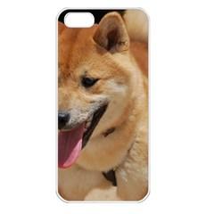 4 Shiba Inu Apple iPhone 5 Seamless Case (White)