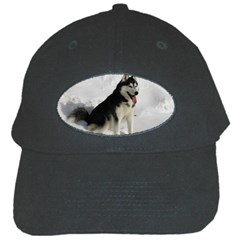 Siberian Husky Sitting in snow Black Cap