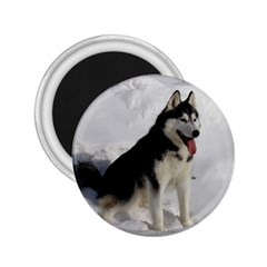 Siberian Husky Sitting in snow 2.25  Magnets