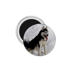 Siberian Husky Sitting in snow 1.75  Magnets