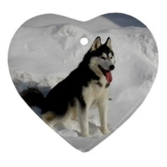 Siberian Husky Sitting in snow Ornament (Heart)