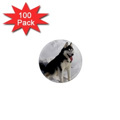 Siberian Husky Sitting in snow 1  Mini Magnets (100 pack)